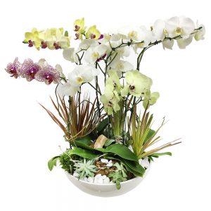 cachepo max de orquideas