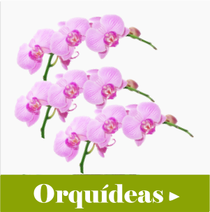 orquideas floricultura Shopping West Plaza